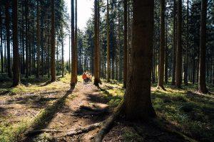 De natuur van de Ardennen